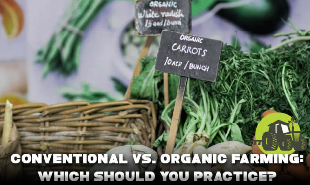 Conventional vs. Organic Farming: Which should you practice?
